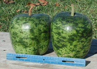 apple gourd. when dried, an apple gourd can be made into birdhouses, toys and bowls. o