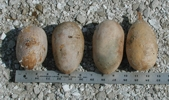 Dried Nest Egg Gourds
